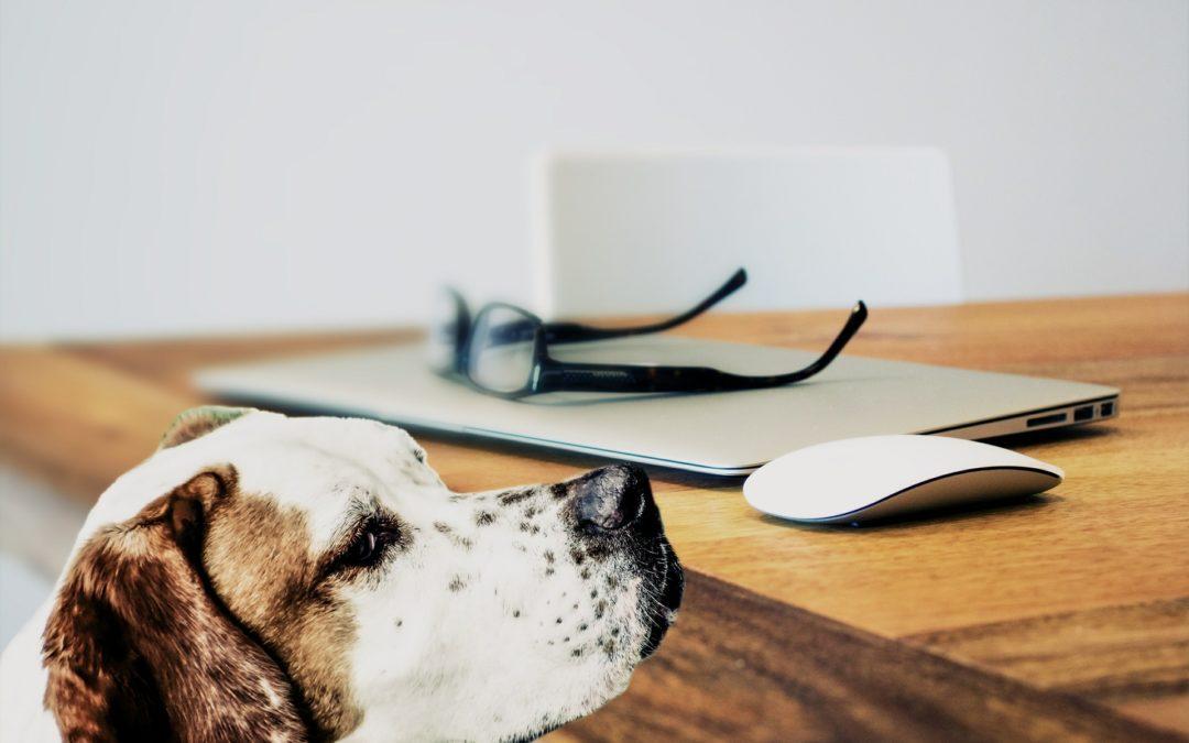 Du comportementalisme animalier au management (2/4)